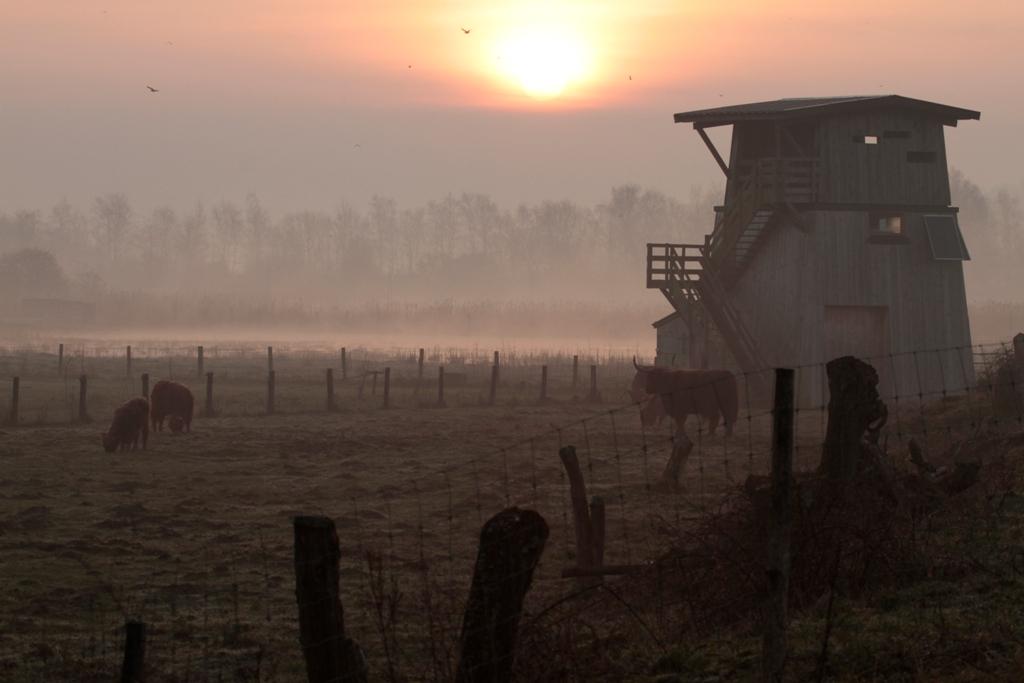 Prairie à l'aube