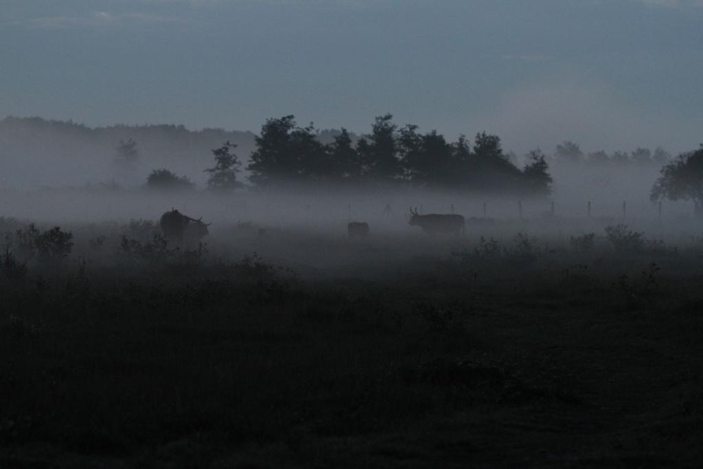 Petit matin sur les prairies, on distingue la silhouette des Highlands