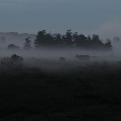 Petit matin sur les prairies, on distingue la silhouette des Highlands