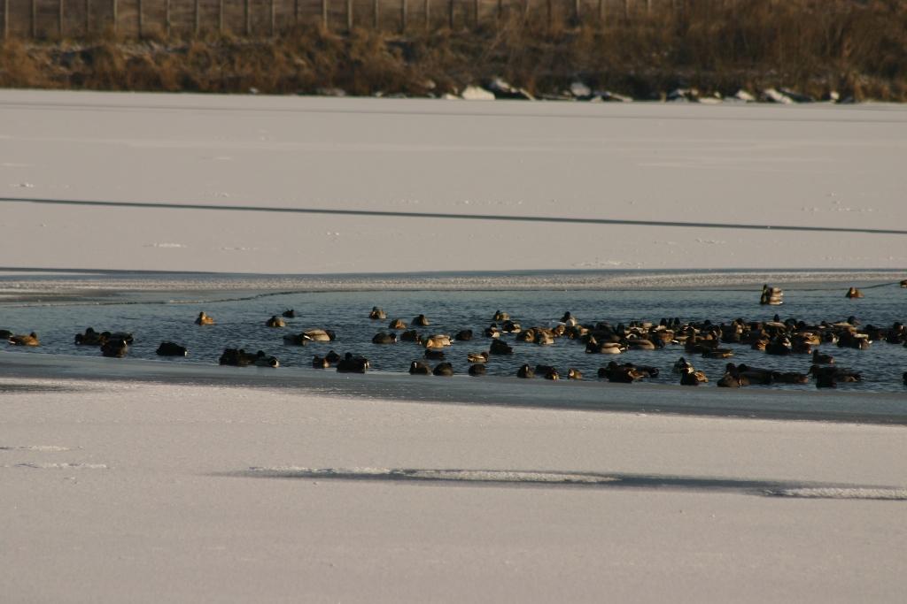 Bassin sud gelé