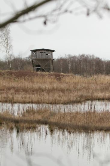 Roselière et mirador Bassin Sud