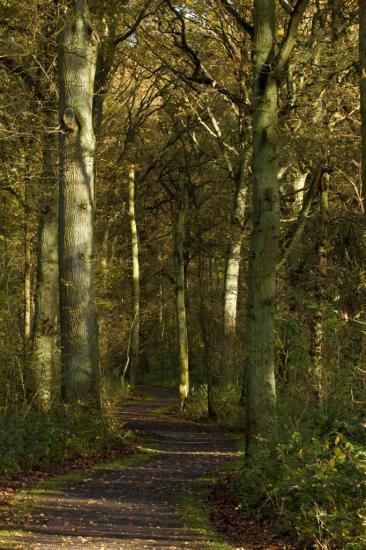 Cheminement au milieu des chênes centenaires