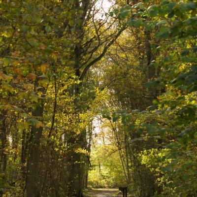 Chemin du chevreuil