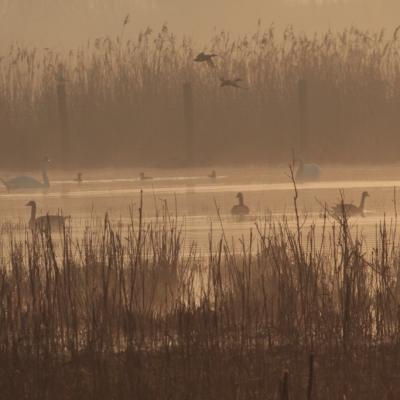 Aube sur prairie humide