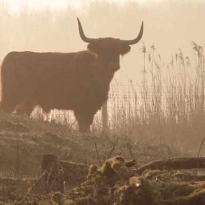 Highlands dans la brume, hommage à Dian Fossey et Jane Goodall