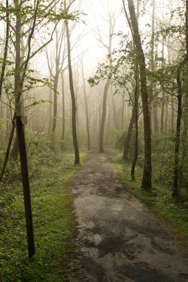 Cheminement forestier, derniers instants de brume matinale