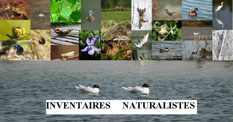 Inventaires Naturalistes du site ornithologique des cinq tailles