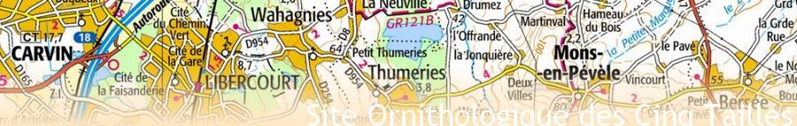 Site Ornithologique départemental des Cinq-Tailles, Photo du mois, Thumeries, Site ornithologique des 5 Tailles, La Neuville, Highland cattle
