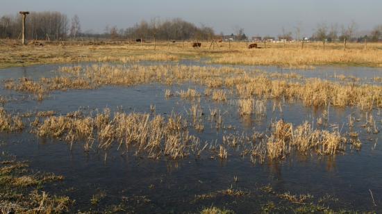 Prairie innondée