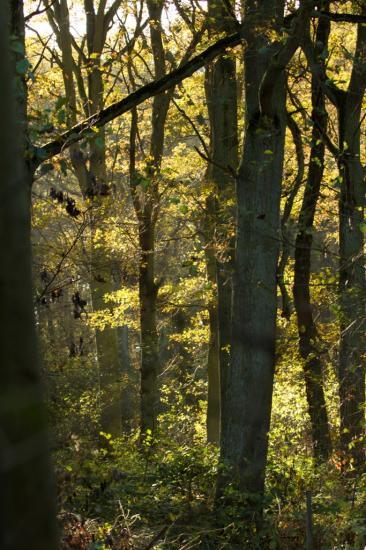 Site ornithologique des cinq tailles, la forêt