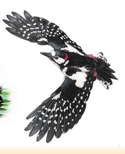 Site Ornithologique départemental des Cinq-Tailles, Pic épeiche, oiseaux, Ornithologie