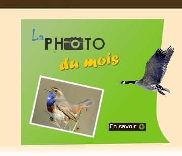 Site Ornithologique départemental des Cinq-Tailles, La photo du mois