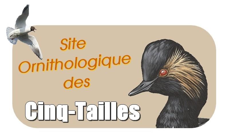Site Ornihologique des Cinq Tailles